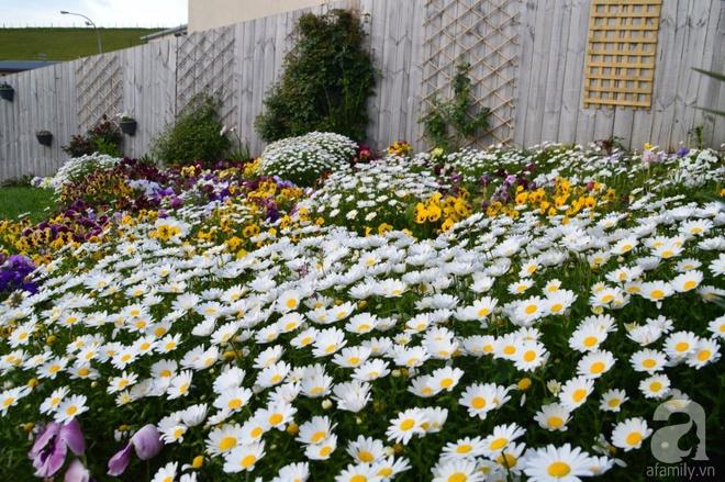Người phụ nữ Việt tự tay biến khu vườn 700m² đầy cỏ dại thành một thảm hoa cúc dịu dàng - Ảnh 7.