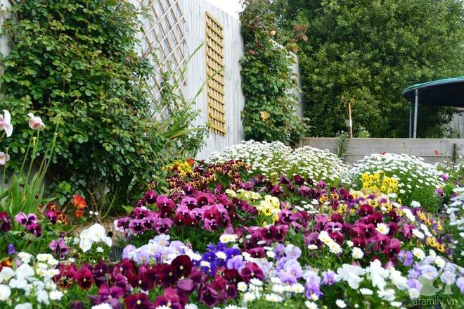 Người phụ nữ Việt tự tay biến khu vườn 700m² đầy cỏ dại thành một thảm hoa cúc dịu dàng - Ảnh 9.
