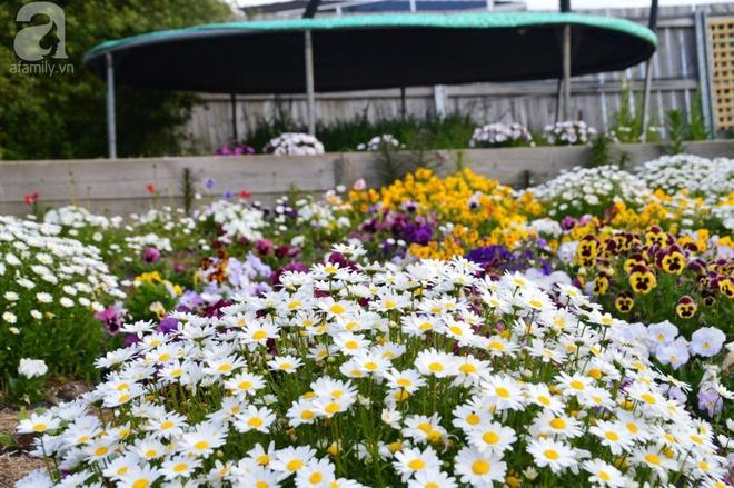 Người phụ nữ Việt tự tay biến khu vườn 700m² đầy cỏ dại thành một thảm hoa cúc dịu dàng - Ảnh 10.
