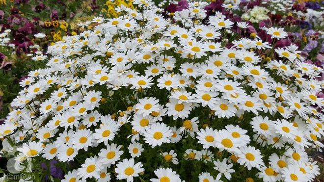 Người phụ nữ Việt tự tay biến khu vườn 700m² đầy cỏ dại thành một thảm hoa cúc dịu dàng - Ảnh 12.