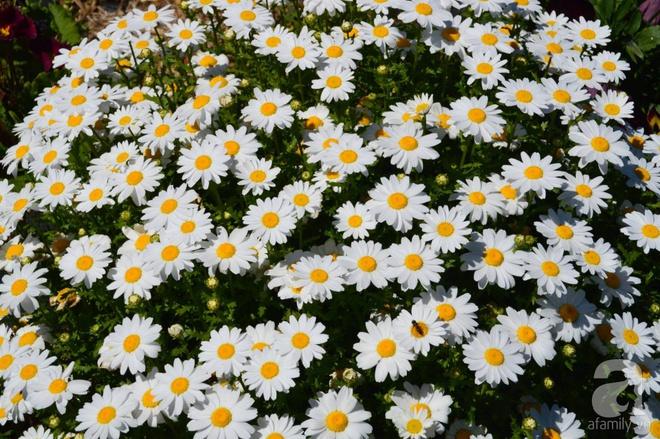 Người phụ nữ Việt tự tay biến khu vườn 700m² đầy cỏ dại thành một thảm hoa cúc dịu dàng - Ảnh 20.