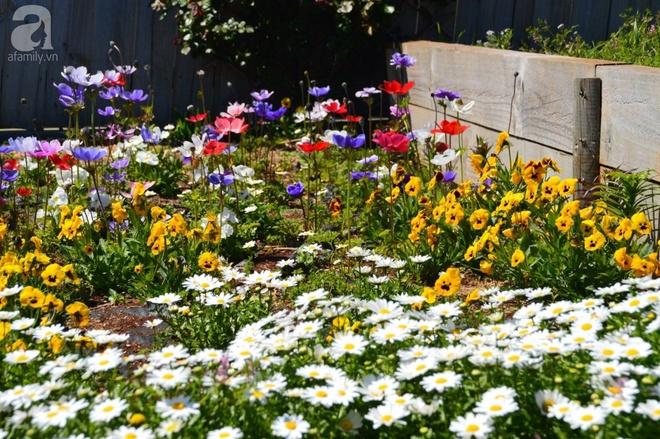 Người phụ nữ Việt tự tay biến khu vườn 700m² đầy cỏ dại thành một thảm hoa cúc dịu dàng - Ảnh 21.
