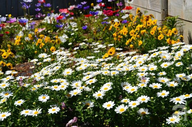 Người phụ nữ Việt tự tay biến khu vườn 700m² đầy cỏ dại thành một thảm hoa cúc dịu dàng - Ảnh 24.