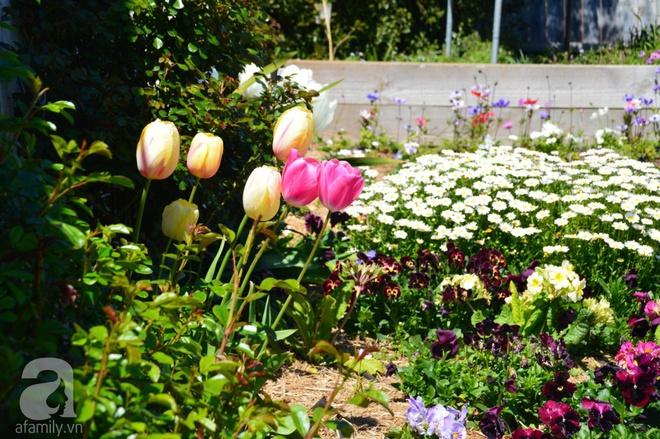 Người phụ nữ Việt tự tay biến khu vườn 700m² đầy cỏ dại thành một thảm hoa cúc dịu dàng - Ảnh 25.