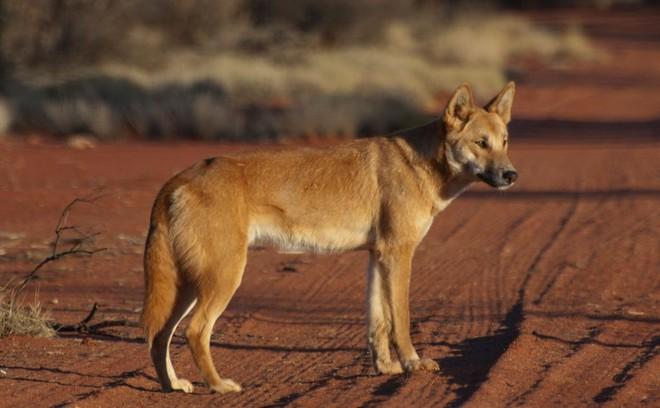 Những loài động vật tưởng tầm thường nhưng có sức mạnh thay đổi cả thế giới - Ảnh 1.
