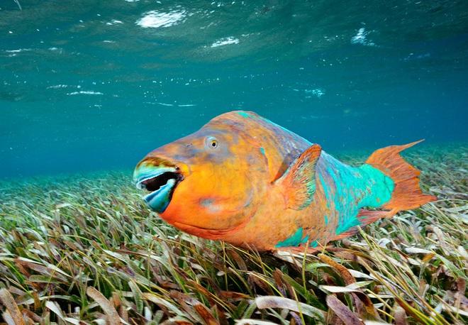 Những loài động vật tưởng tầm thường nhưng có sức mạnh thay đổi cả thế giới - Ảnh 2.