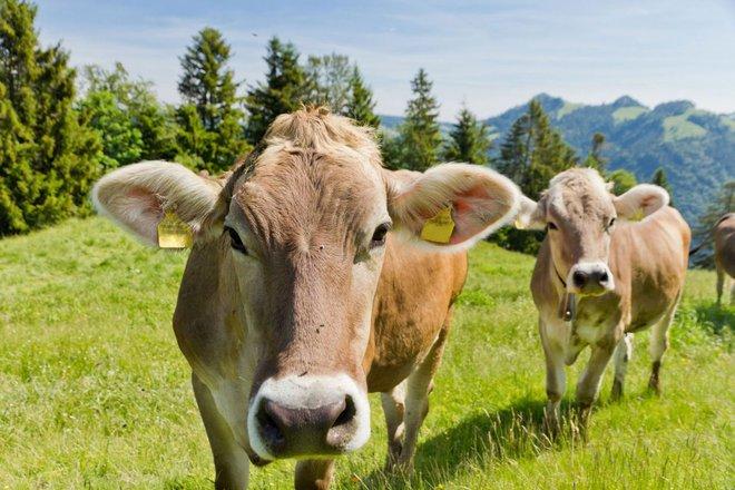 Những loài động vật tưởng tầm thường nhưng có sức mạnh thay đổi cả thế giới - Ảnh 4.