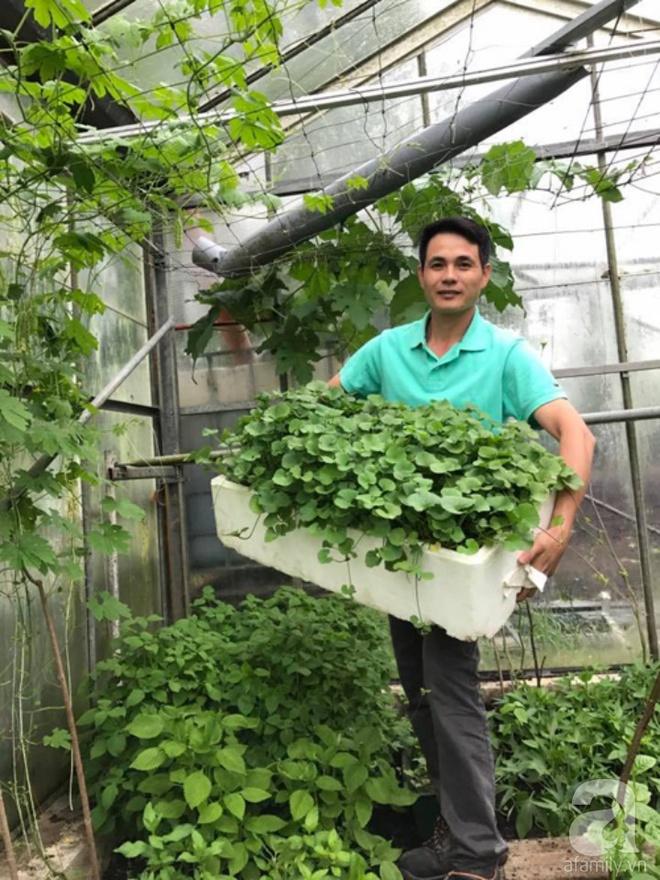 Ông bố quê xứ Thanh trồng cả vườn rau rộng thênh thang lên đến 3500m² với đủ mọi loại cây trái - Ảnh 1.