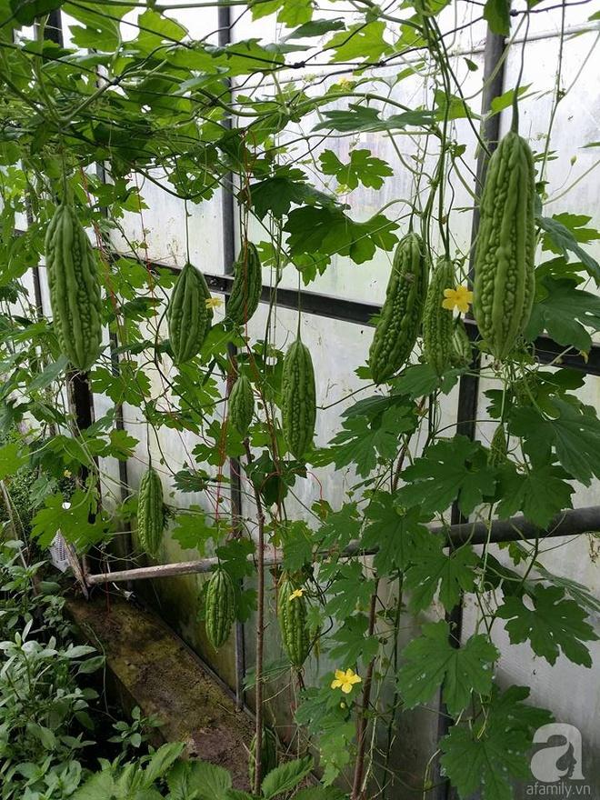 Ông bố quê xứ Thanh trồng cả vườn rau rộng thênh thang lên đến 3500m² với đủ mọi loại cây trái - Ảnh 11.