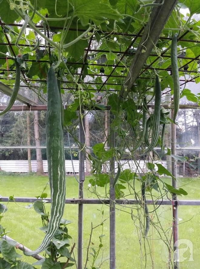 Ông bố quê xứ Thanh trồng cả vườn rau rộng thênh thang lên đến 3500m² với đủ mọi loại cây trái - Ảnh 13.