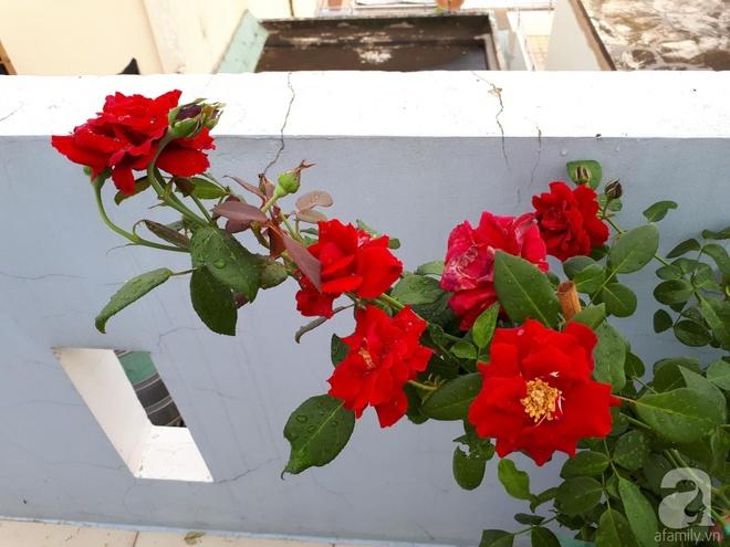 Khu vườn hoa hồng trên mây dịu dàng như một bài thơ của chàng họa sĩ trẻ ở TP. HCM - Ảnh 7.