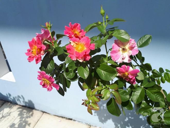 Khu vườn hoa hồng trên mây dịu dàng như một bài thơ của chàng họa sĩ trẻ ở TP. HCM - Ảnh 8.