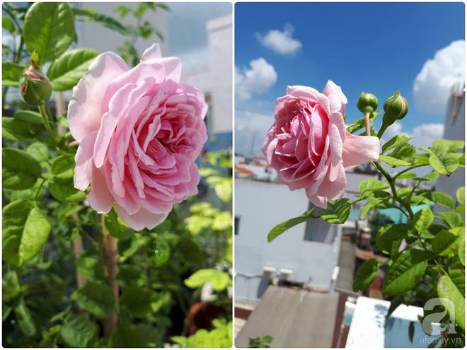 Khu vườn hoa hồng trên mây dịu dàng như một bài thơ của chàng họa sĩ trẻ ở TP. HCM - Ảnh 10.