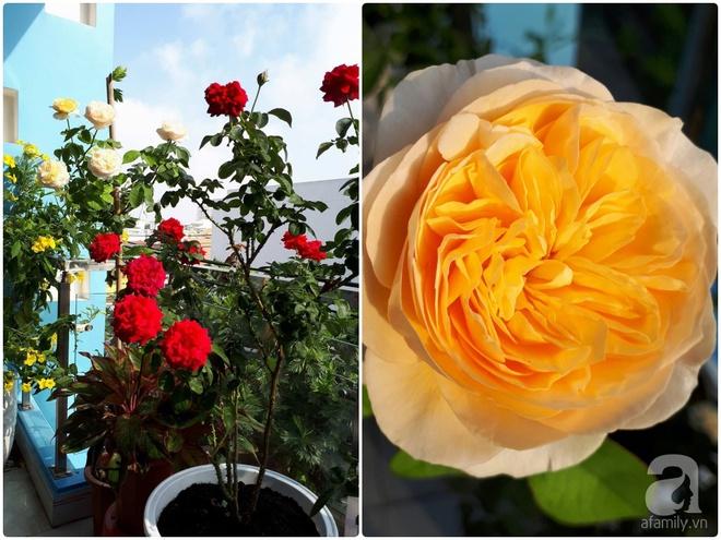 Khu vườn hoa hồng trên mây dịu dàng như một bài thơ của chàng họa sĩ trẻ ở TP. HCM - Ảnh 11.