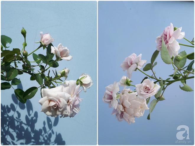 Khu vườn hoa hồng trên mây dịu dàng như một bài thơ của chàng họa sĩ trẻ ở TP. HCM - Ảnh 13.