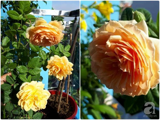 Khu vườn hoa hồng trên mây dịu dàng như một bài thơ của chàng họa sĩ trẻ ở TP. HCM - Ảnh 15.