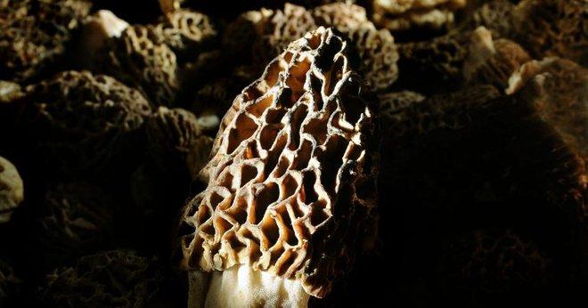 Người đàn ông tưởng bị vấp vào đống bùn đất nhưng không ngờ đó là tuyệt phẩm của tạo hóa - Ảnh 1.