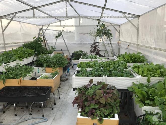 Bà mẹ trẻ ở Sài Gòn dựng hẳn khung thép trên sân thượng để trồng vườn rau quanh năm xanh tốt - Ảnh 3.