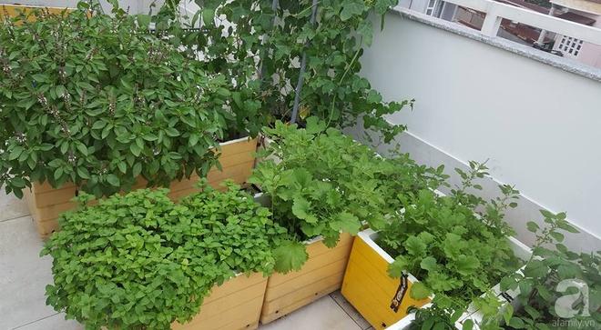Bà mẹ trẻ ở Sài Gòn dựng hẳn khung thép trên sân thượng để trồng vườn rau quanh năm xanh tốt - Ảnh 6.