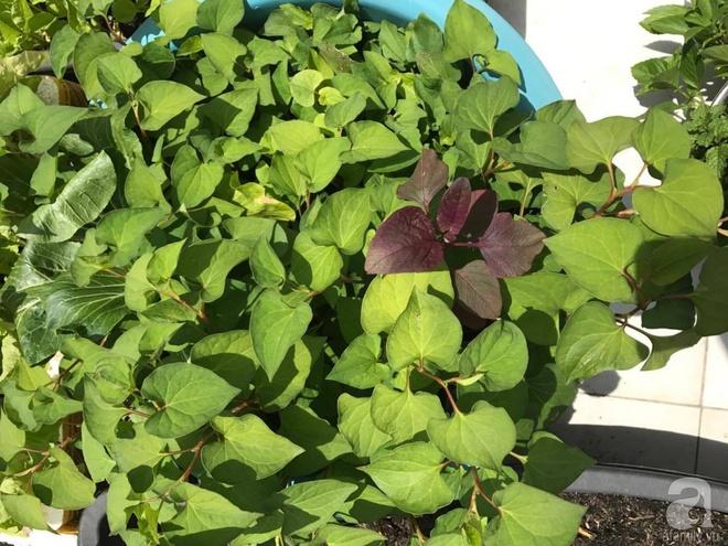 Bà mẹ trẻ ở Sài Gòn dựng hẳn khung thép trên sân thượng để trồng vườn rau quanh năm xanh tốt - Ảnh 9.