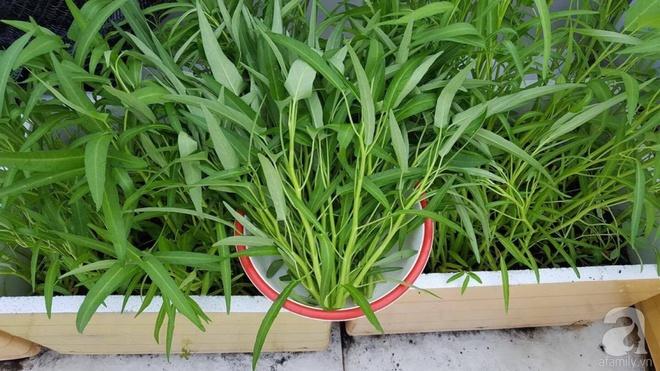Bà mẹ trẻ ở Sài Gòn dựng hẳn khung thép trên sân thượng để trồng vườn rau quanh năm xanh tốt - Ảnh 11.
