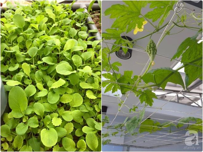 Bà mẹ trẻ ở Sài Gòn dựng hẳn khung thép trên sân thượng để trồng vườn rau quanh năm xanh tốt - Ảnh 13.