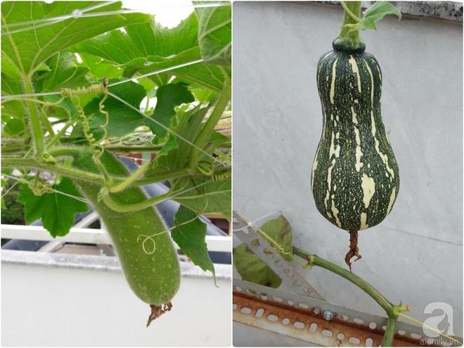 Bà mẹ trẻ ở Sài Gòn dựng hẳn khung thép trên sân thượng để trồng vườn rau quanh năm xanh tốt - Ảnh 14.