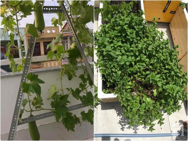 Bà mẹ trẻ ở Sài Gòn dựng hẳn khung thép trên sân thượng để trồng vườn rau quanh năm xanh tốt - Ảnh 15.