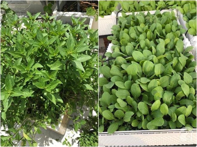 Bà mẹ trẻ ở Sài Gòn dựng hẳn khung thép trên sân thượng để trồng vườn rau quanh năm xanh tốt - Ảnh 16.