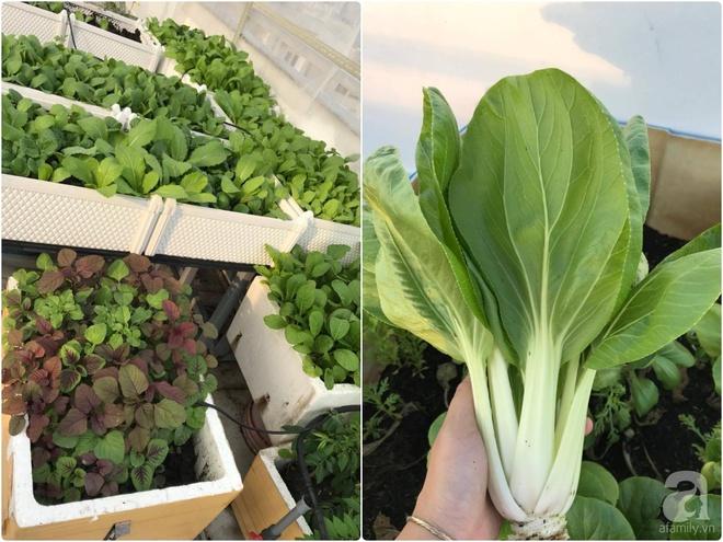 Bà mẹ trẻ ở Sài Gòn dựng hẳn khung thép trên sân thượng để trồng vườn rau quanh năm xanh tốt - Ảnh 17.