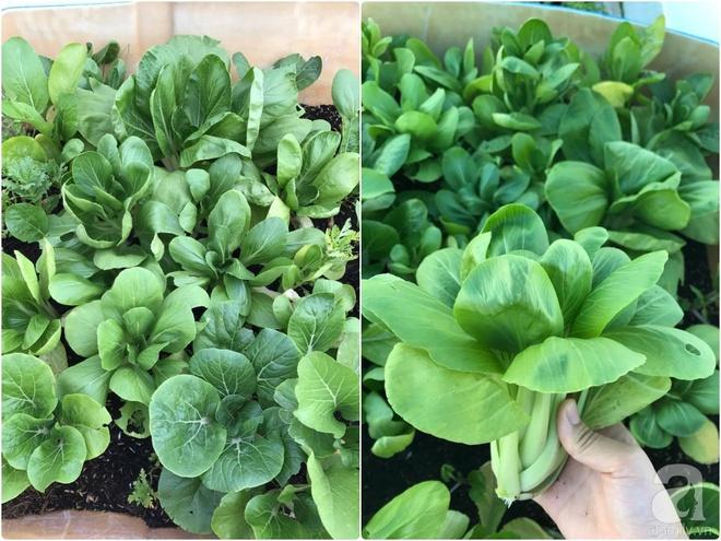 Bà mẹ trẻ ở Sài Gòn dựng hẳn khung thép trên sân thượng để trồng vườn rau quanh năm xanh tốt - Ảnh 18.
