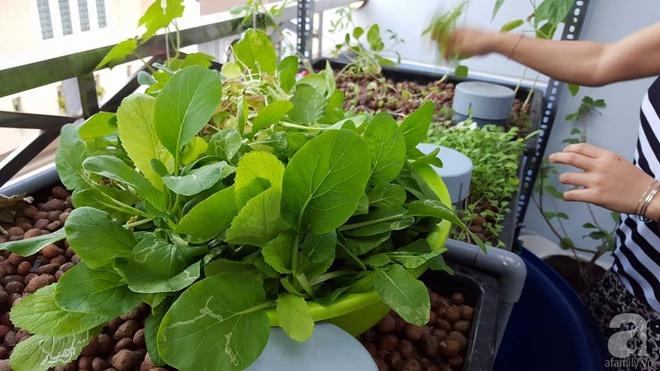 Bà mẹ trẻ ở Sài Gòn dựng hẳn khung thép trên sân thượng để trồng vườn rau quanh năm xanh tốt - Ảnh 20.