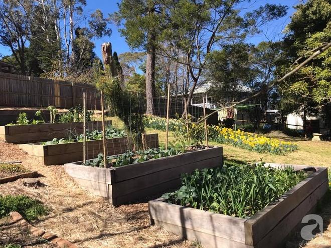 Nàng dâu Việt ở Úc tự tay cải tạo mảnh đất gần 2000m² thành khu vườn rực rỡ sắc hoa và rau quả - Ảnh 9.