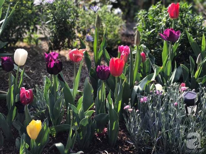 Nàng dâu Việt ở Úc tự tay cải tạo mảnh đất gần 2000m² thành khu vườn rực rỡ sắc hoa và rau quả - Ảnh 23.