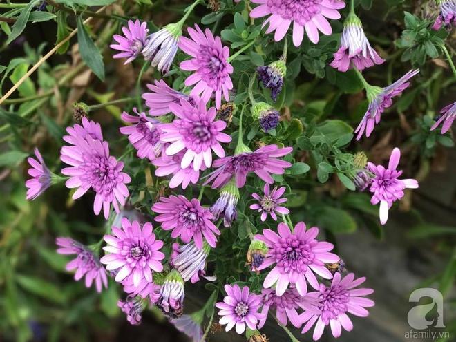 Nàng dâu Việt ở Úc tự tay cải tạo mảnh đất gần 2000m² thành khu vườn rực rỡ sắc hoa và rau quả - Ảnh 28.