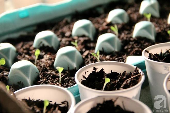 Nữ du học sinh Việt tại Mỹ tiết lộ bí quyết tạo khu vườn mini 6m² nhưng đủ rau và hoa đẹp hút hồn - Ảnh 10.