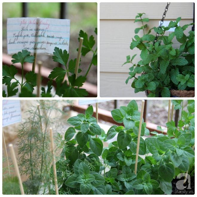 Nữ du học sinh Việt tại Mỹ tiết lộ bí quyết tạo khu vườn mini 6m² nhưng đủ rau và hoa đẹp hút hồn - Ảnh 22.
