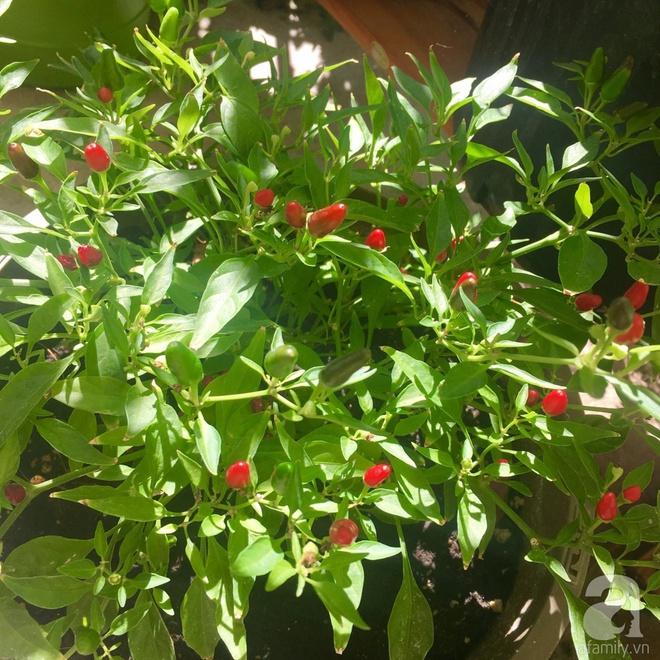 Nữ du học sinh Việt tại Mỹ tiết lộ bí quyết tạo khu vườn mini 6m² nhưng đủ rau và hoa đẹp hút hồn - Ảnh 24.