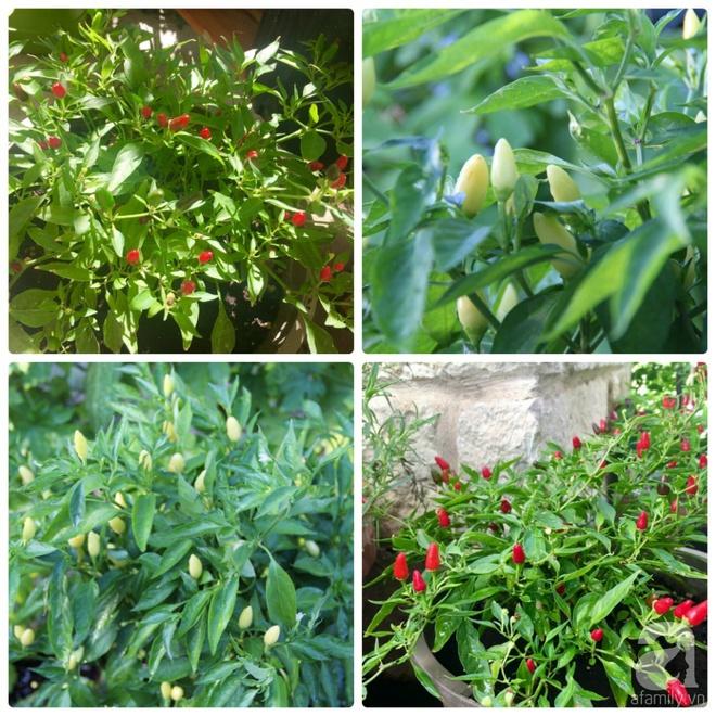 Nữ du học sinh Việt tại Mỹ tiết lộ bí quyết tạo khu vườn mini 6m² nhưng đủ rau và hoa đẹp hút hồn - Ảnh 26.