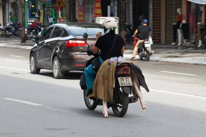 UBND TP Hà Nội đã có quy định về việc quản lý hoạt động giết mổ, vận chuyển, chế biến, buôn bán gia súc, gia cầm trên địa bàn thành phố Hà Nội thế nhưng tình trạng thịt lợn vẫn hàng ngày không được bảo quản đúng cách, vẫn ngang nhiên chạy trên phố đến những cửa hàng nhỏ ở từng khu dân cư trong thành phố.