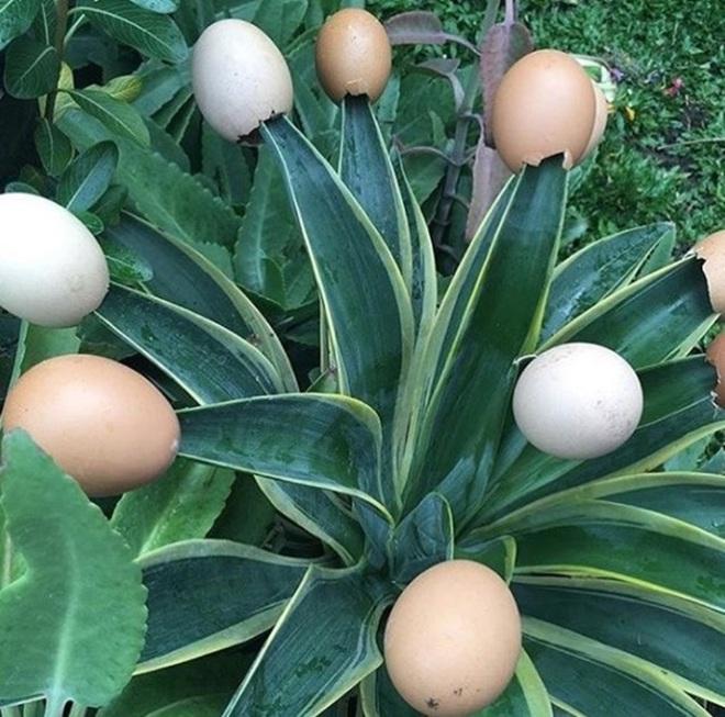 Những ý tưởng làm vườn có 1-0-2 đến các bác nông dân cũng phải ngả mũ bái phục - Ảnh 4.