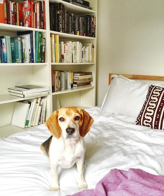Học cách trang trí nhà với tông trắng tinh tế như hôn thê của hoàng tử Harry - Ảnh 10.