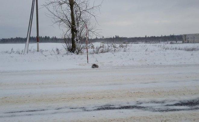 Thấy con vật đông cứng giữa tuyết, người đàn ông đem về và điều kỳ diệu xảy ra - Ảnh 1.