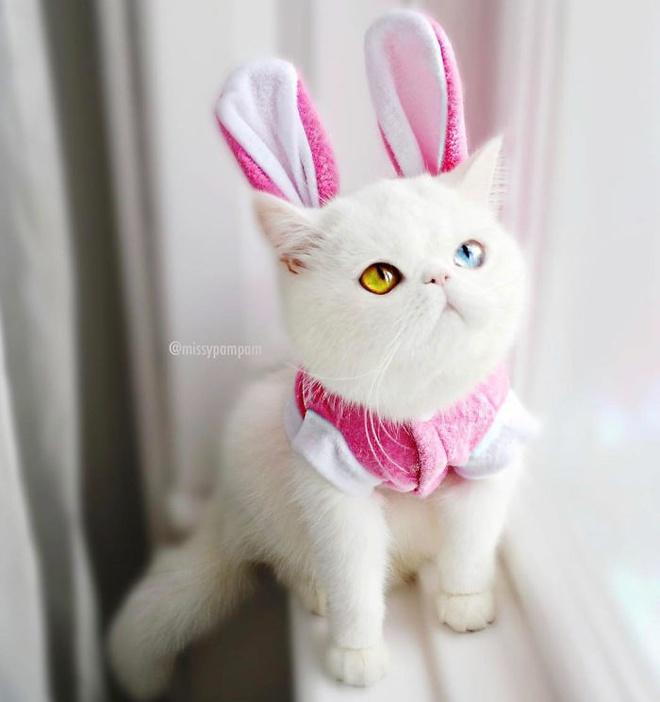 Mắc bệnh hiếm gặp, nàng mèo sở hữu 2 màu mắt tuyệt đẹp   - Ảnh 12.