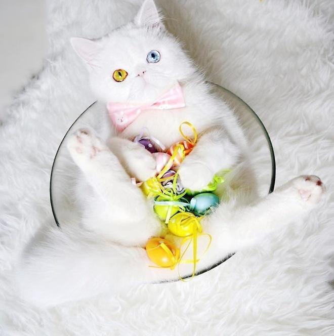 Mắc bệnh hiếm gặp, nàng mèo sở hữu 2 màu mắt tuyệt đẹp   - Ảnh 2.