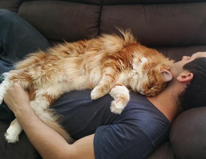 Đây đích thị là chú mèo khổng lồ nhất thế giới, dài tới 1,2m - Ảnh 5.