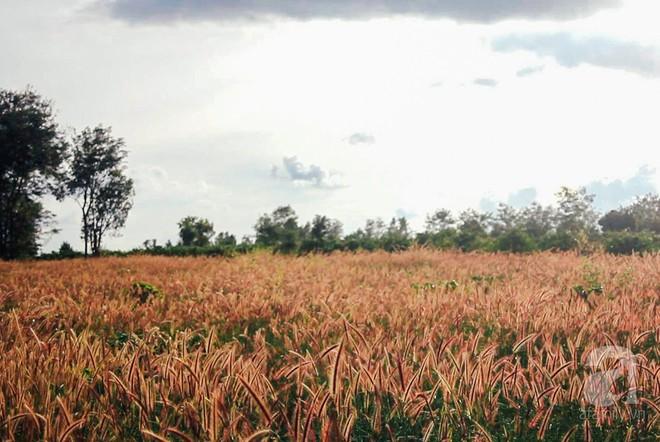 Ở Việt Nam có một điểm đến thơ mộng và lãng mạn chẳng kém Đà Lạt, nhất định nên đến trong dịp cuối năm - Ảnh 8.