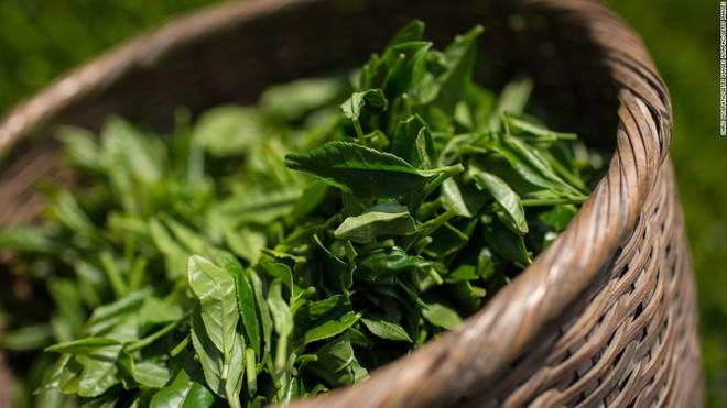 Nếu có sở thích uống trà xanh để giải nhiệt mùa hè thì bạn đừng bao giờ bỏ qua những điều này - Ảnh 1.