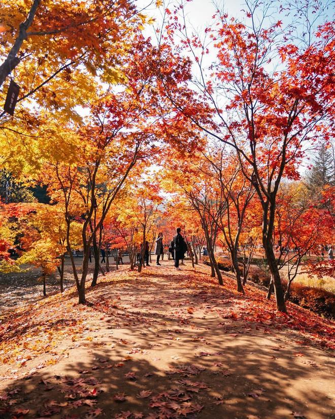 Mùa cưới đến rồi, bỏ túi ngay những địa chỉ chụp ảnh đẹp mê ly với lá vàng, lá đỏ này thôi - Ảnh 3.