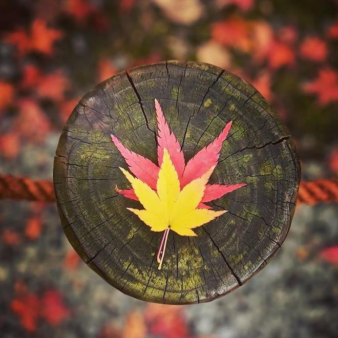5 điểm đến mùa thu sẽ khiến bạn ngất ngây vì phong cảnh đẹp như trong mơ - Ảnh 9.